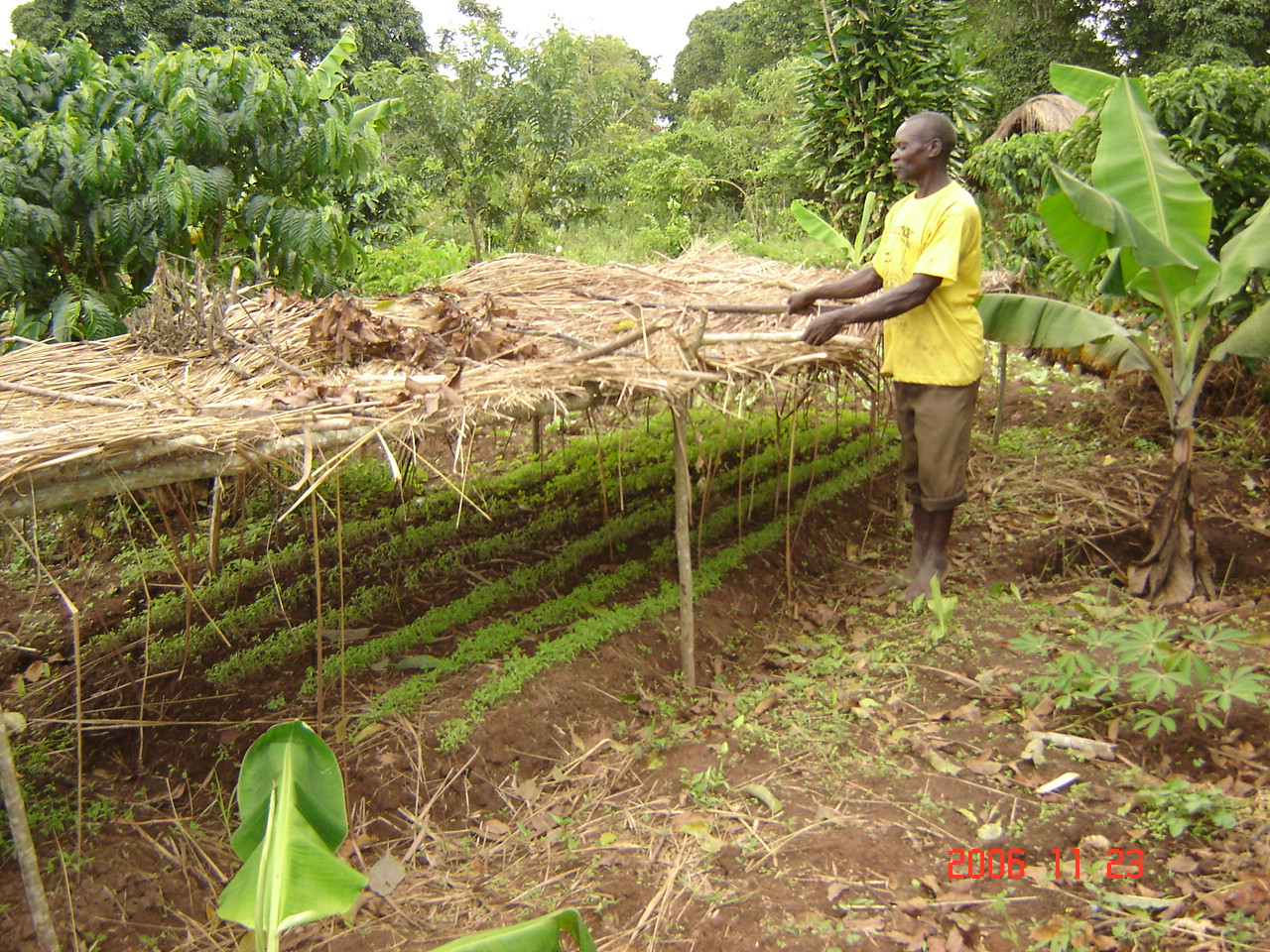 Agro-forestry practices supported by CESA-Uganda for environment conservation in Luweero District.