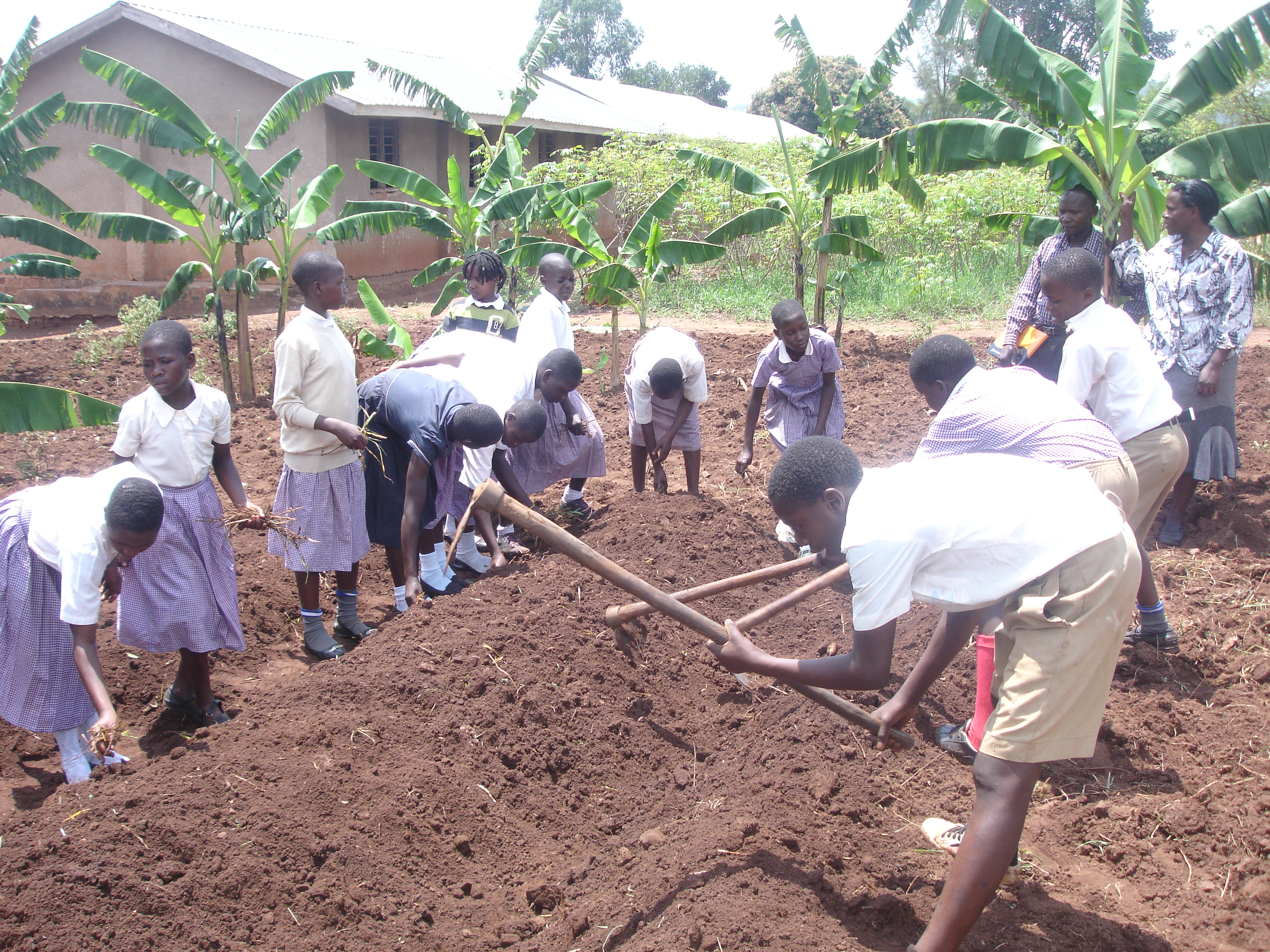 CESA-Uganda empowers school to produce enough food at school