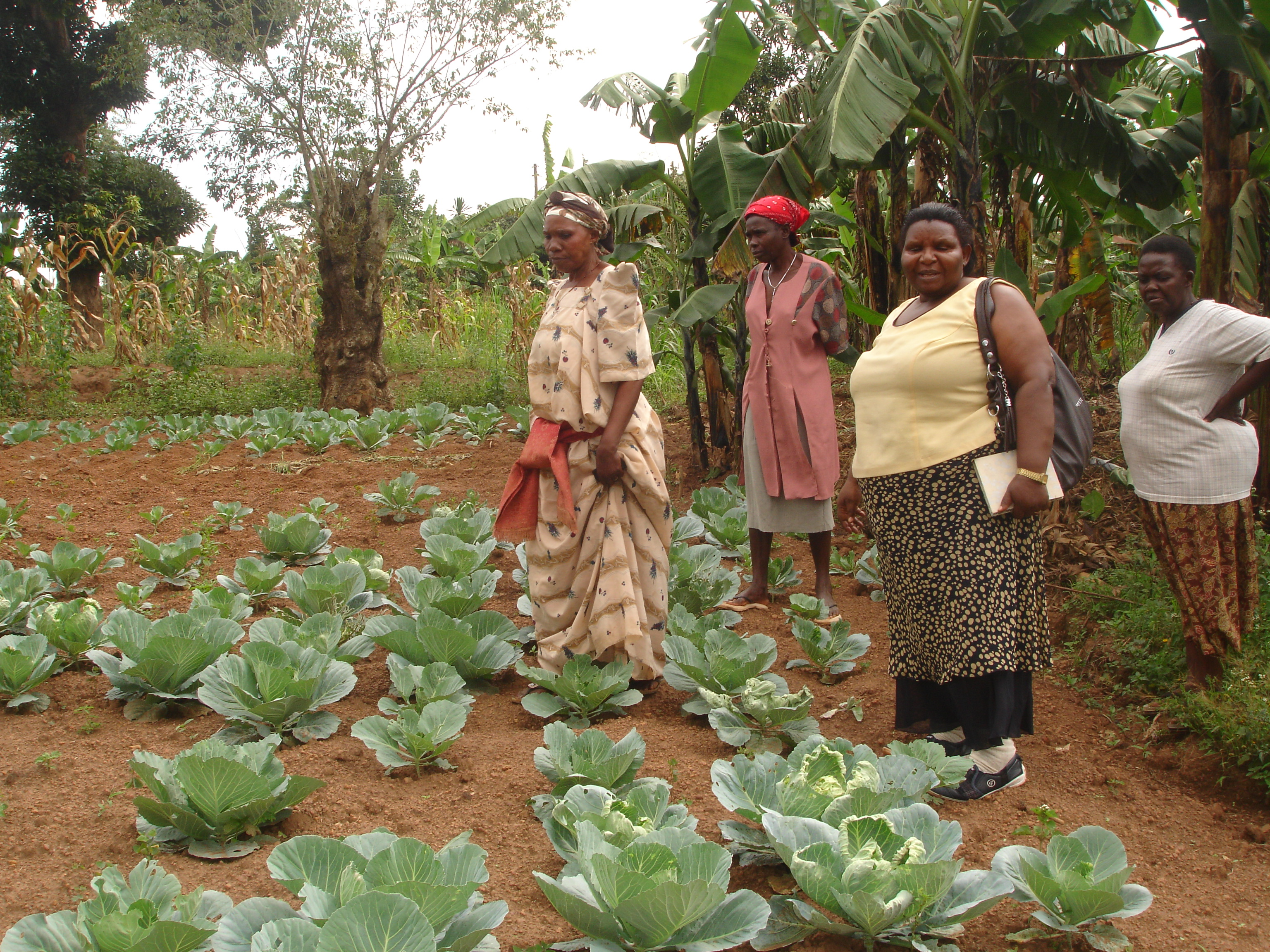 Knowledge is wealth members of kyotta mugavu women group supported by CESA-Uganda gets knolwdege on vegetable production